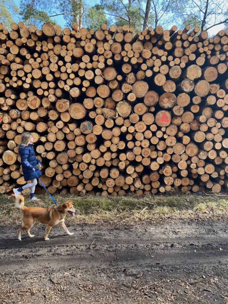 מה למדתי השבוע בהולנד – עירום דידקטי, כפר נסתר וחיוך משותף
